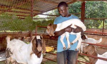 goat_breeding_header