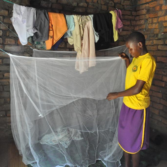 Sq Mosquito net DSC_0210